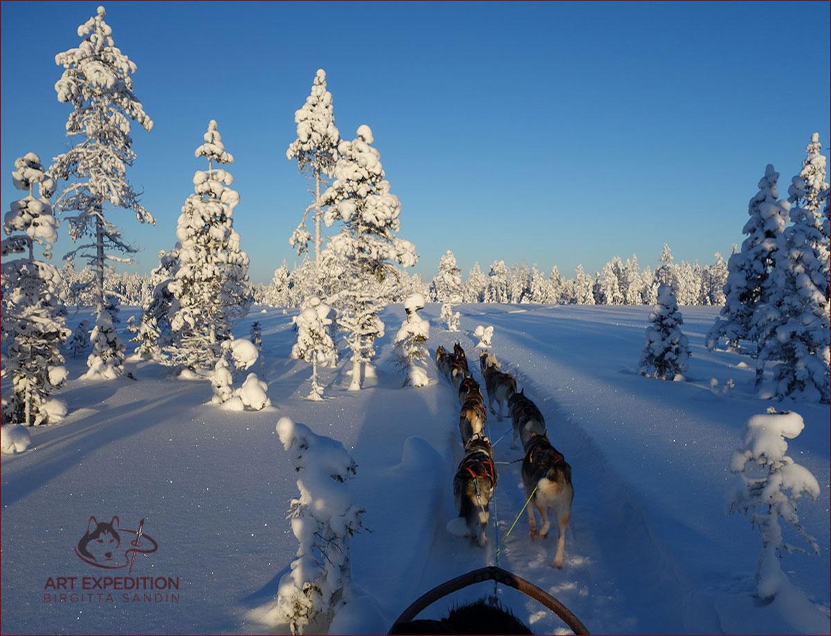 Siberian huskyspann, Nymånen slädhundar i Arvidsjaur