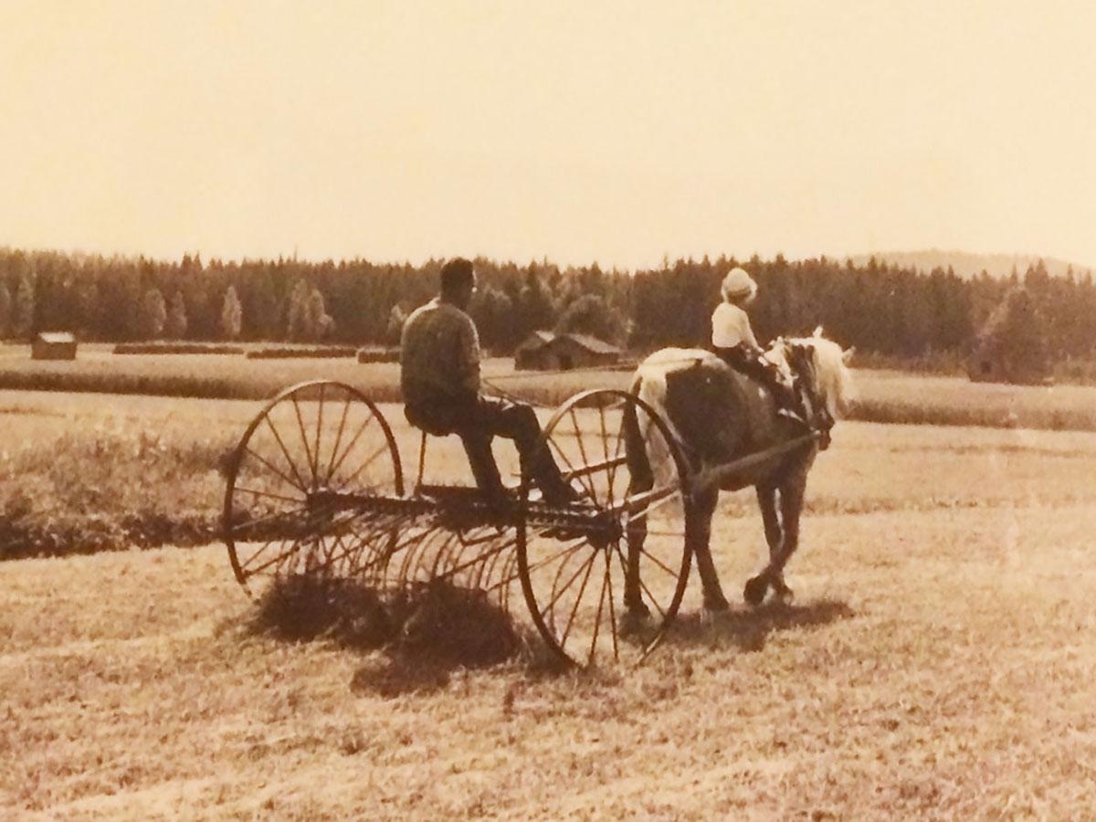 Farfars häst. Måttsundsronningen på 60-talet